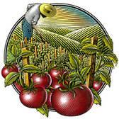 Steven Noble - Advertising, Agriculture, Botanical, Engraving, Food, Food/Beverage, Health, Horticulture, Landscape, Packaging, Scratch Board, Woodcut